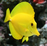 Marine aquarium fish for sale in wholesale and retails price