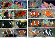 supplies of all kind of Marine fishes