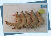 Get Your Hands On Fresh King Fish Online With Hamvi Seafoods