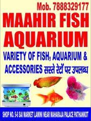 Maahir Fish Aquarium